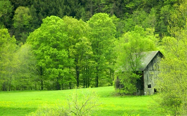 A sea of green surrounds Tucker's Barn in Tunbridge, Vermont. (Photo: M.S. Maguire)